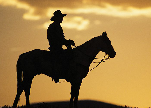 Silhouette of man riding horse during sunset